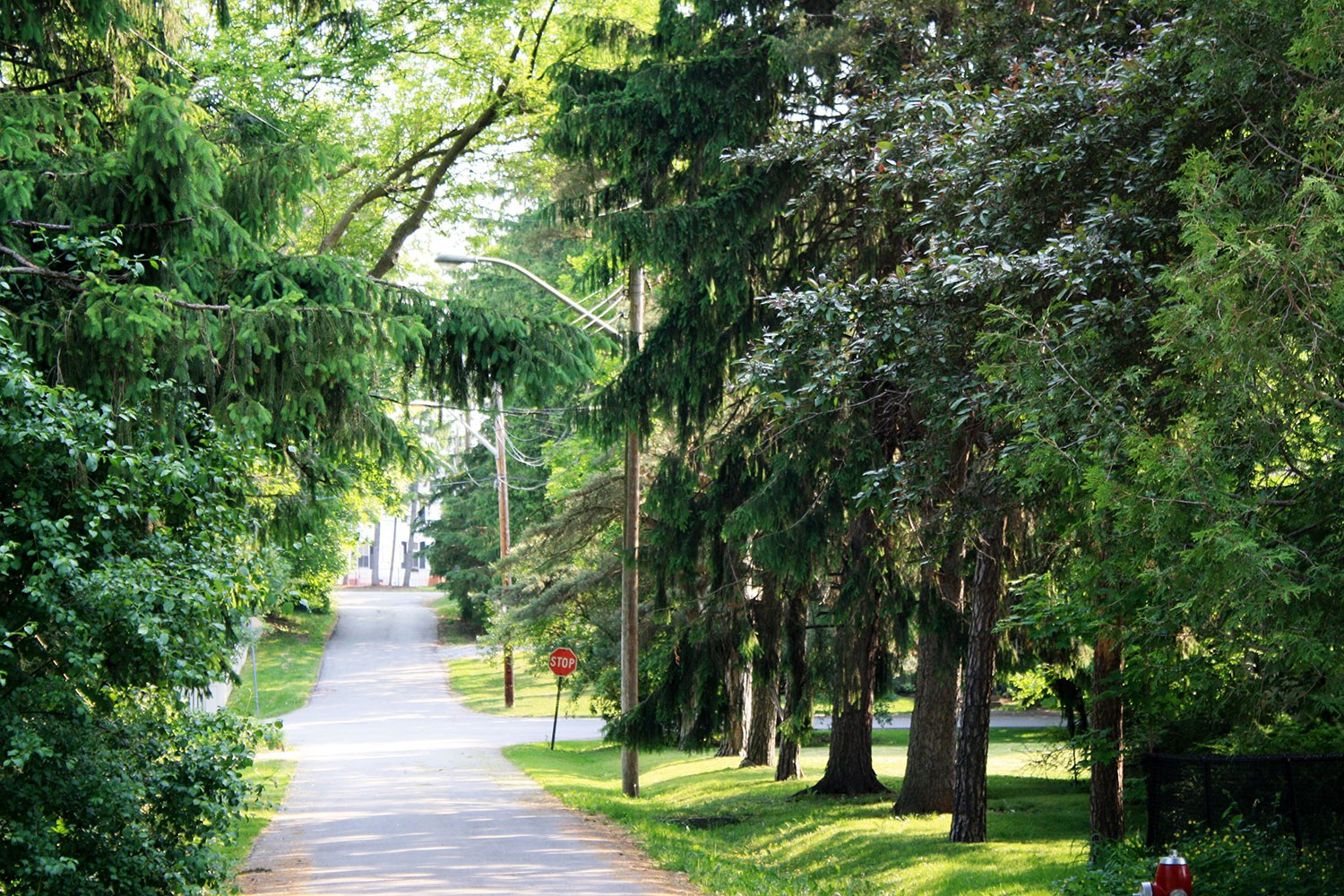 Barberry Lane streetscape in the Meadowvale Village HCD (Photo: City of Mississauga)
